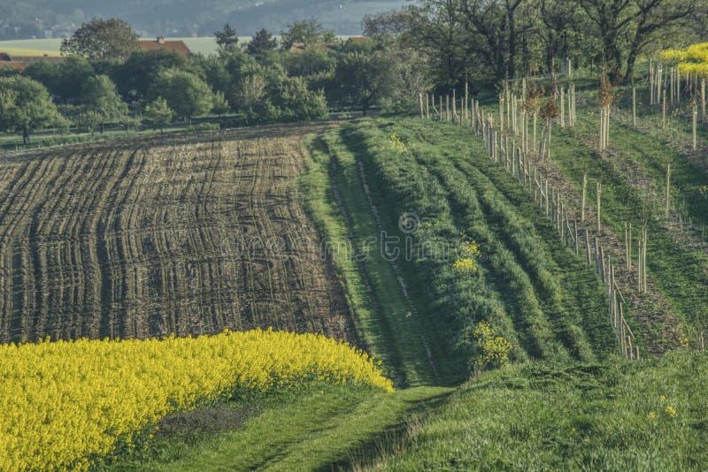 Paisaje de la primavera de Moravia meridional con una violación de semilla oleaginosa floreciente fotos de archivo