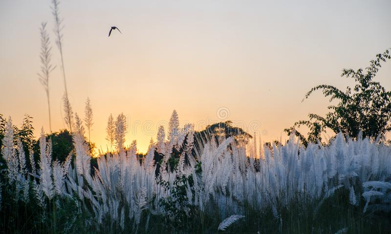 Paisaje de la puesta del sol sobre las flores blancas hermosas fotografía de archivo