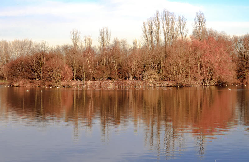 Paisaje de la reflexión de los árboles del otoño fotos de archivo libres de regalías