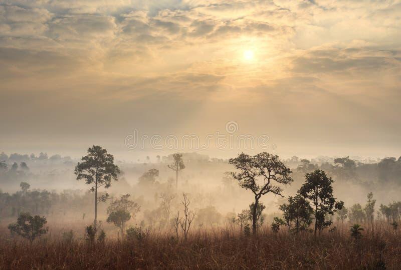 Paisaje de la sabana de Tailandia en la salida del sol foto de archivo