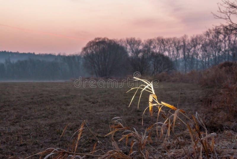 Paisaje de la salida del sol en prado por el río foto de archivo
