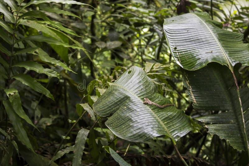 Paisaje de la selva con una serpiente en la hoja enorme imagen de archivo libre de regalías