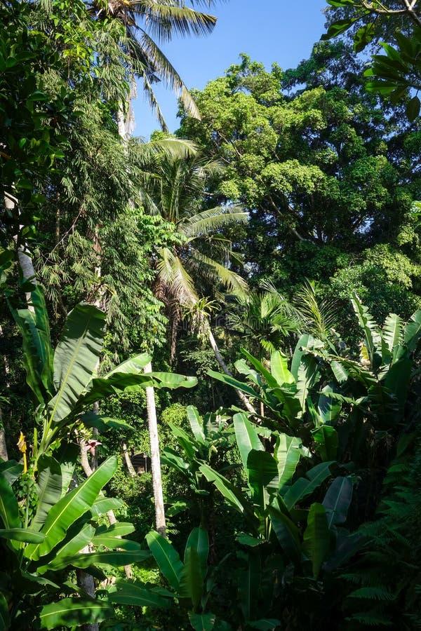 Paisaje de la selva en la cueva del elefante de Goa Gajah, Ubud, Bali, Indonesia fotografía de archivo libre de regalías