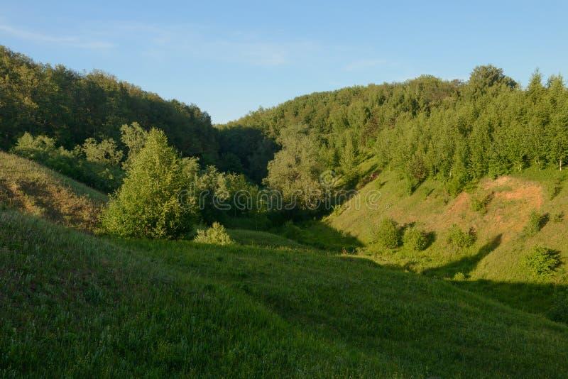 Paisaje de la tarde del verano con el bosque verde en las laderas imágenes de archivo libres de regalías
