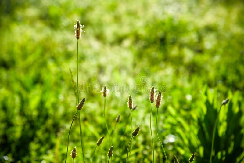 Paisaje de la tierra, crecimiento y concepto del ambiente natural - hierba fresca y cielo azul soleado en un campo verde en la sa foto de archivo libre de regalías