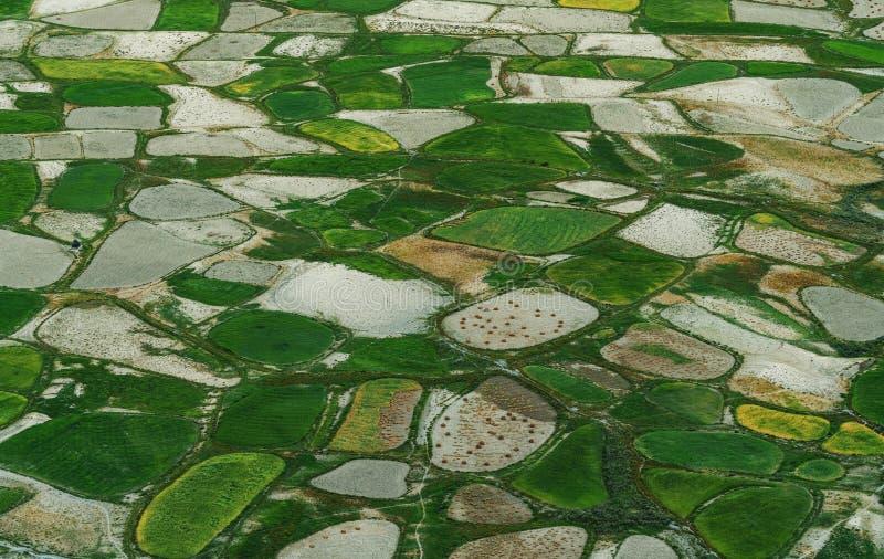 Paisaje de la visión aérea, modelo verde del campo del arroz en zona rural imagenes de archivo