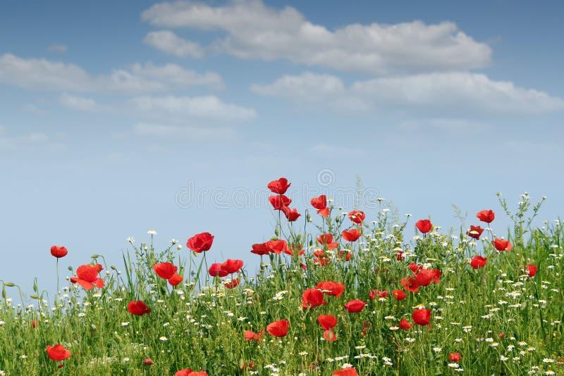 Paisaje de las flores salvajes foto de archivo libre de regalías