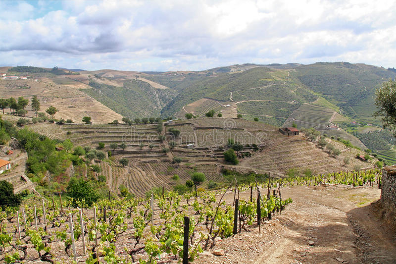 Paisaje de los viñedos del vino de Oporto fotografía de archivo libre de regalías