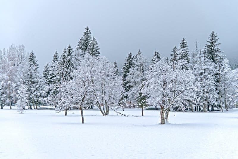 Paisaje de madera del invierno imagenes de archivo