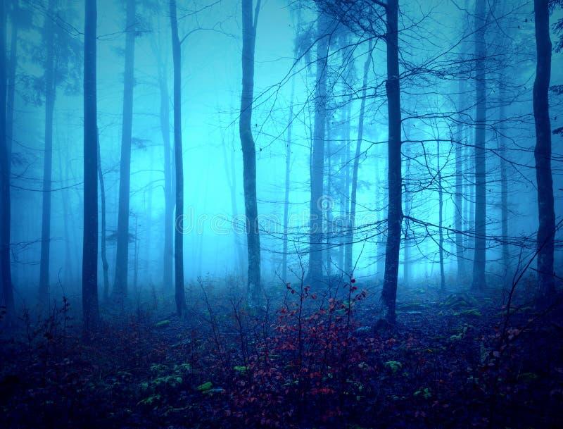 Paisaje de niebla asustadizo oscuro del bosque fotos de archivo libres de regalías