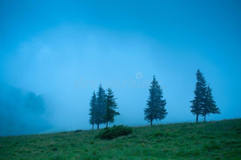 Paisaje de niebla de la mañana con la montaña del árbol de pino imagen de archivo