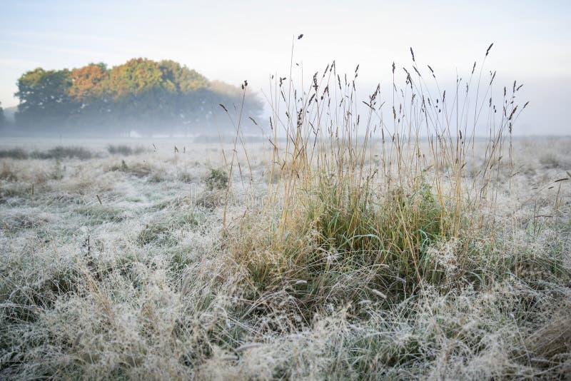 Paisaje de niebla imponente de la salida del sol de Autumn Fall sobre la helada cubierta foto de archivo libre de regalías