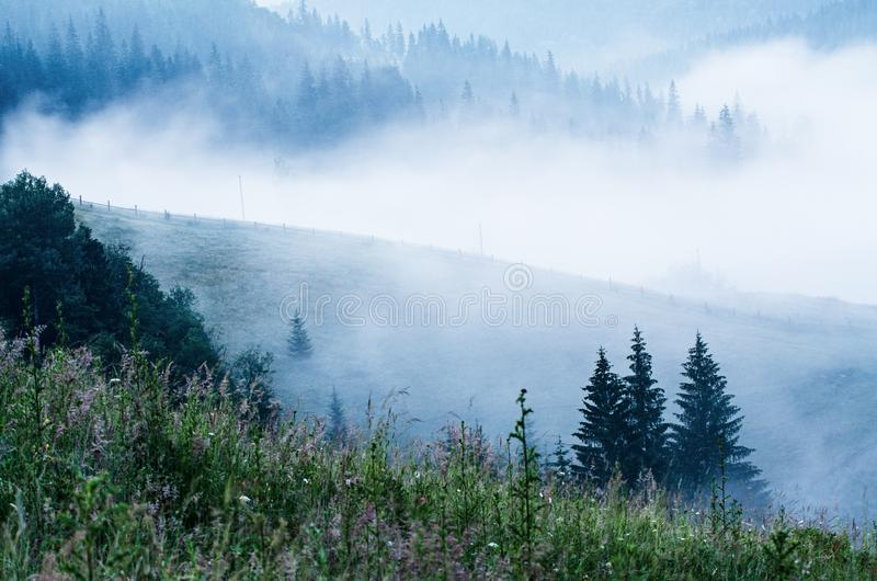 Paisaje de niebla de la ma?ana imagenes de archivo
