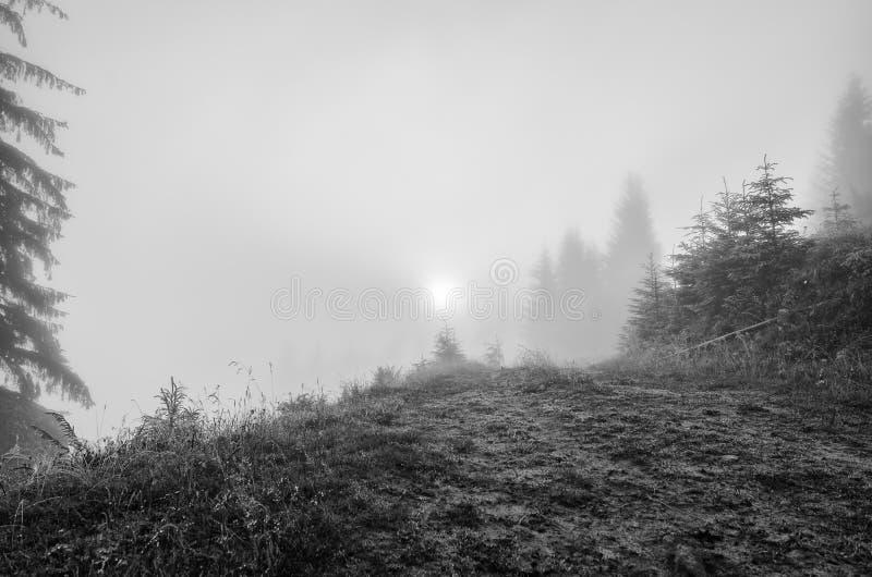 Paisaje de niebla de la ma?ana imagen de archivo