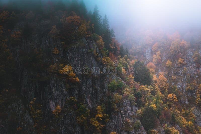 Paisaje de niebla y cambiante en las montañas de los Vosgos, Francia Árboles coloridos y paisaje rocoso del acantilado imagen de archivo libre de regalías