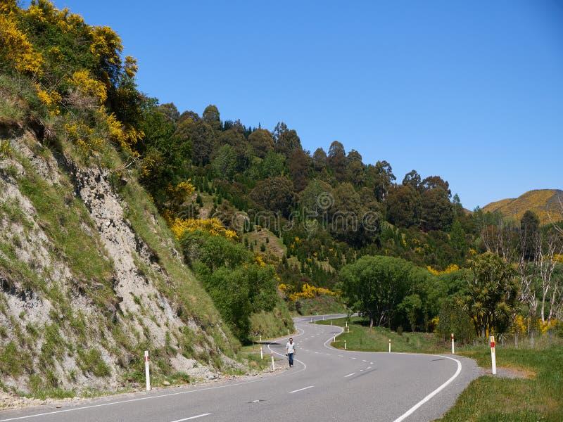 Paisaje de Nueva Zelanda en verano foto de archivo libre de regalías