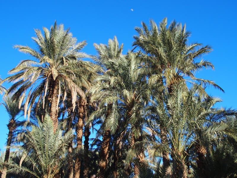 Paisaje de palmeras verdes en oasis en Marruecos central en el pueblo viejo de Oulad fotos de archivo