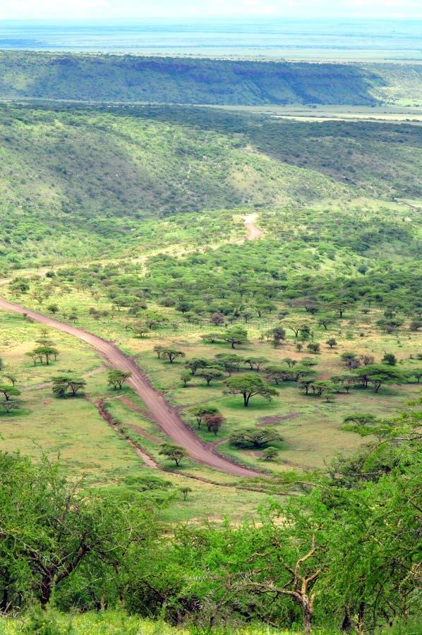Paisaje de Serengeti fotografía de archivo libre de regalías