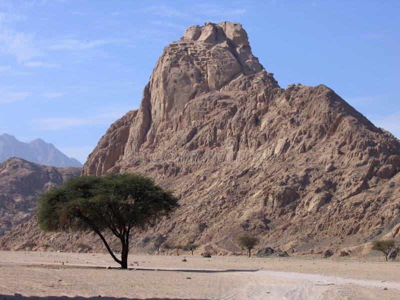 Paisaje de Sinaí foto de archivo