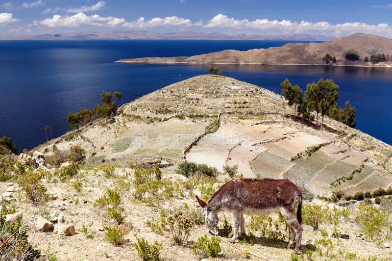 Paisaje de Suramérica, lago Titicaca fotografía de archivo libre de regalías
