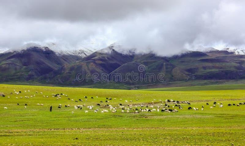 Paisaje de Tíbet Ali imagenes de archivo