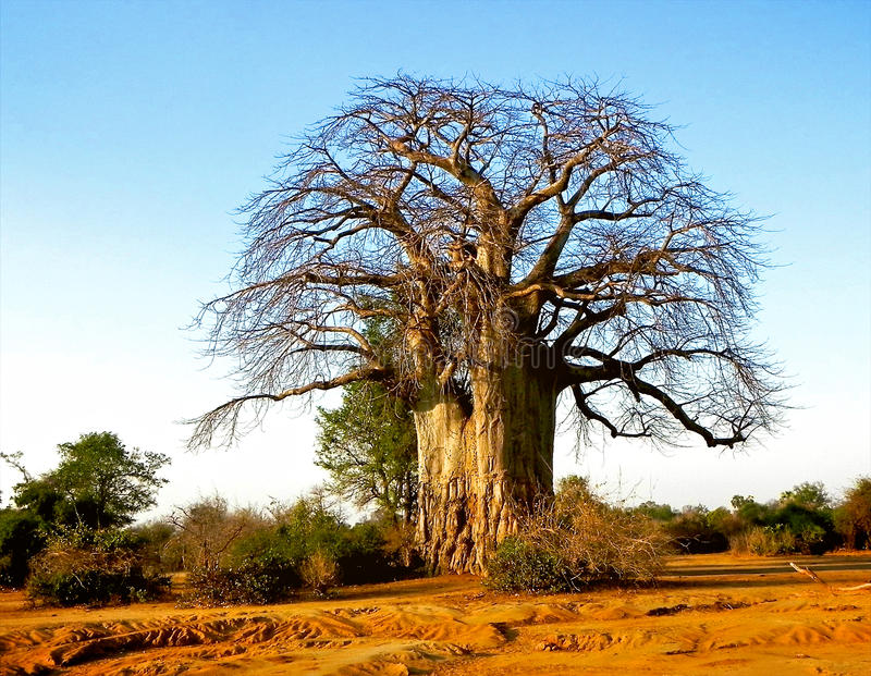 Paisaje de Tanzania foto de archivo