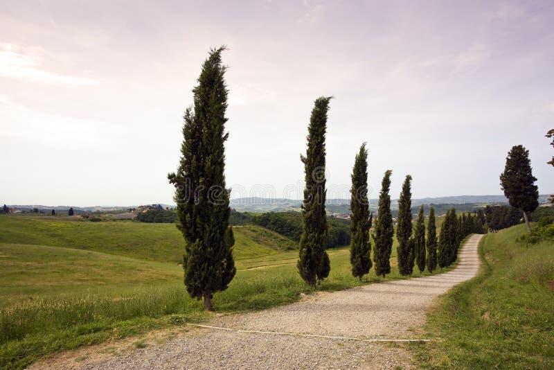 Paisaje de Toscana con el camino rural cosido ciprés fotos de archivo