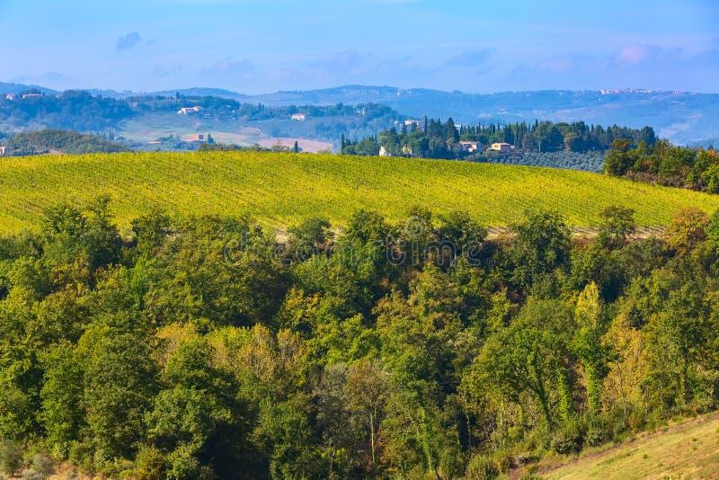 Paisaje de Toscana con filas de los viñedos foto de archivo