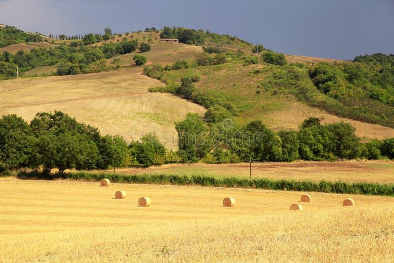 Paisaje de Toscana con las colinas, los campos amarillos y las balas de heno, Tusca fotos de archivo