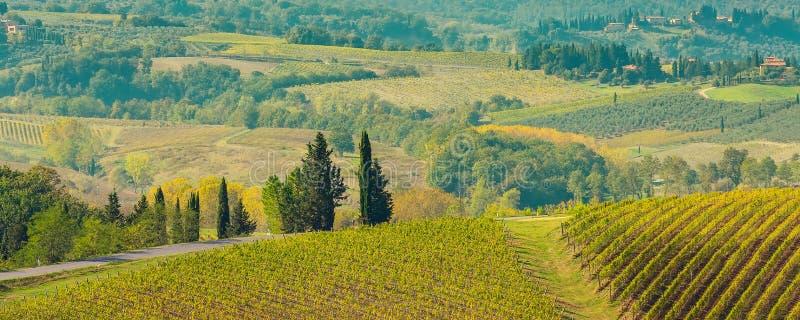 Paisaje de Toscana con los viñedos, árboles de ciprés imagen de archivo libre de regalías