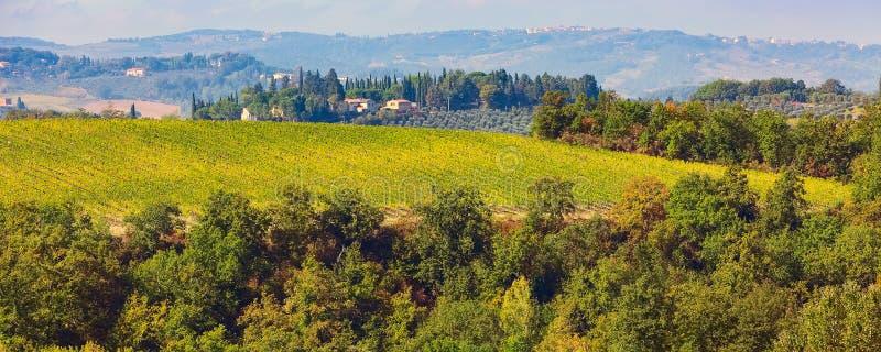 Paisaje de Toscana con los viñedos, árboles de ciprés foto de archivo