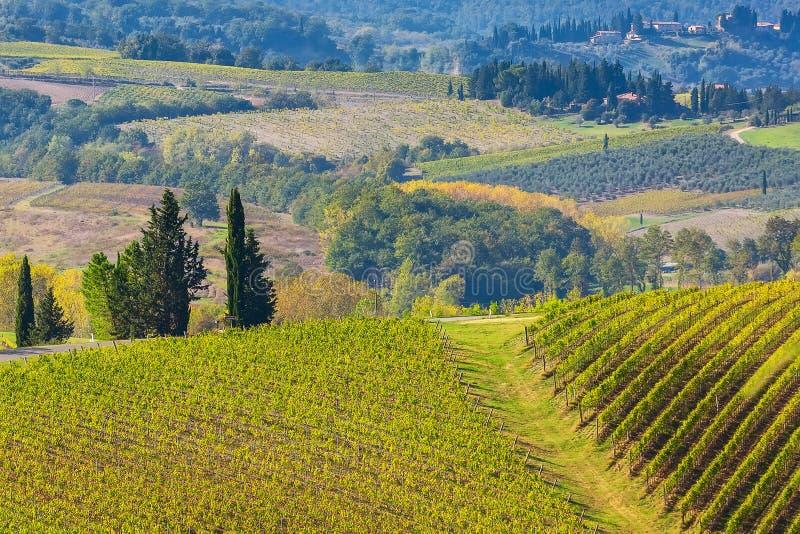 Paisaje de Toscana con los viñedos, árboles de ciprés fotos de archivo