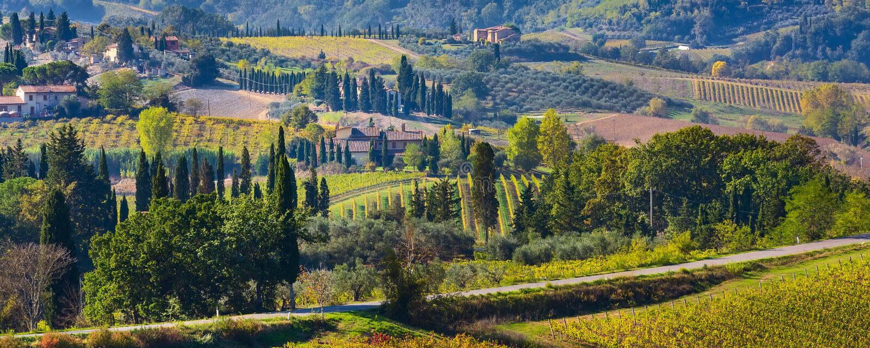 Paisaje de Toscana con los vi?edos, ?rboles de cipr?s imágenes de archivo libres de regalías