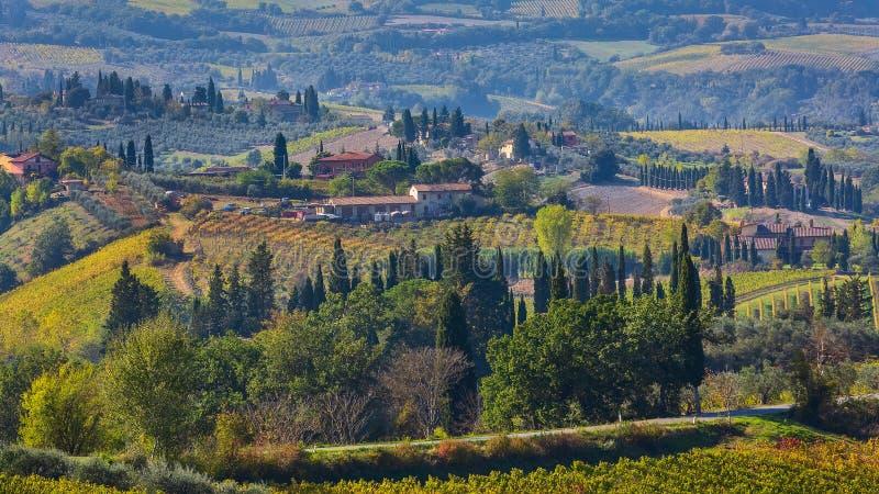 Paisaje de Toscana con los vi?edos, ?rboles de cipr?s fotos de archivo libres de regalías