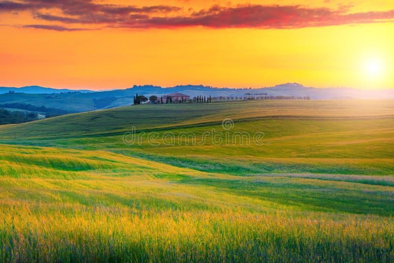 Paisaje de Toscana que sorprende con los campos coloridos de la puesta del sol y de grano, Italia fotos de archivo
