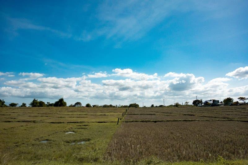 Paisaje de un campo del arroz imagen de archivo