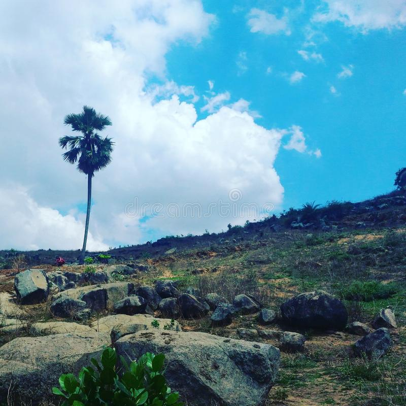 Paisaje de una palmera imagenes de archivo