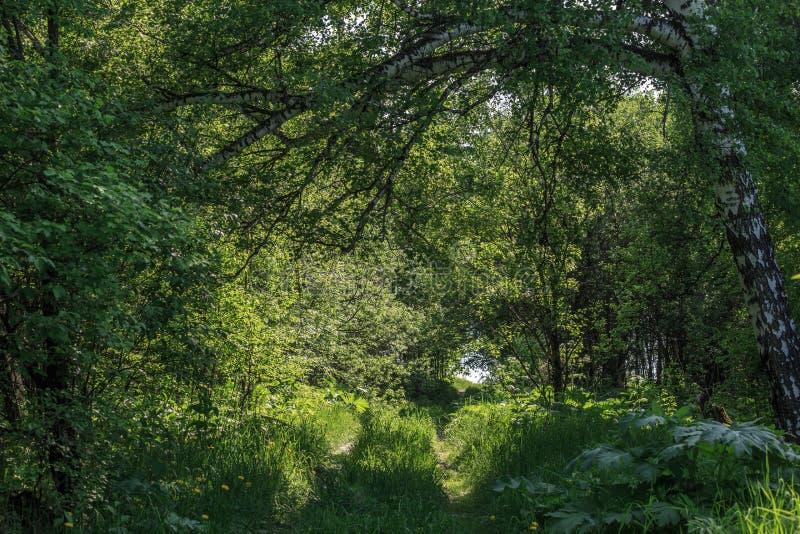 Paisaje de verano foto de archivo libre de regalías