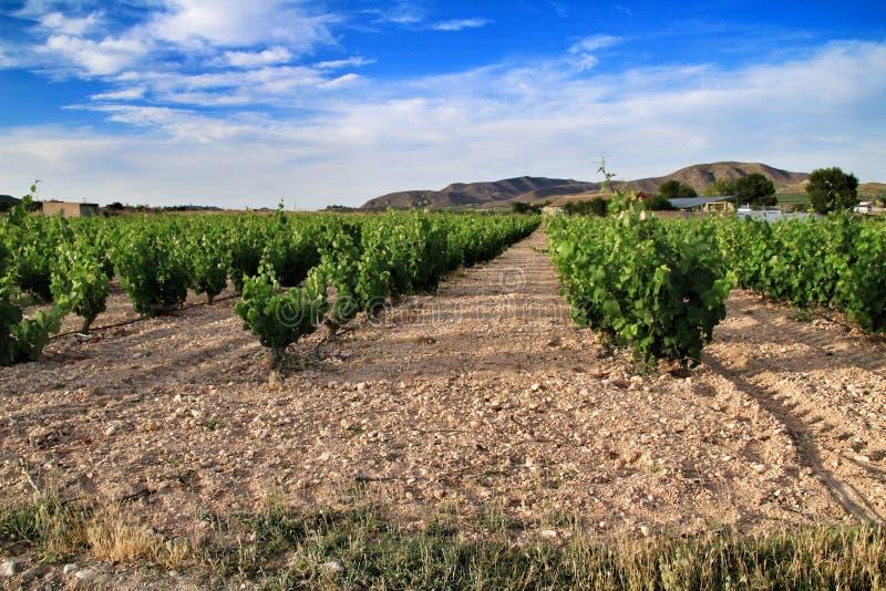 Paisaje de viñedos en provincia de Jumilla, Murcia imagenes de archivo