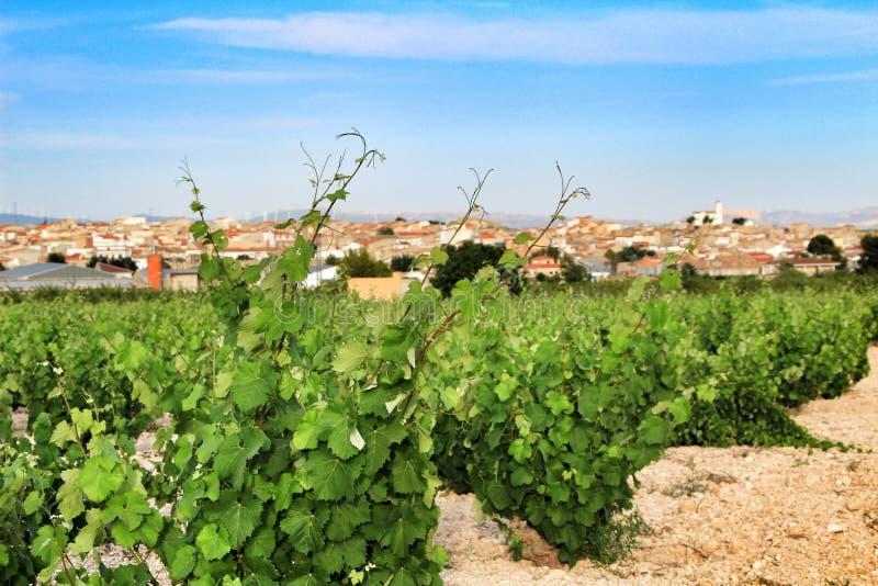 Paisaje de viñedos en provincia de Jumilla, Murcia foto de archivo