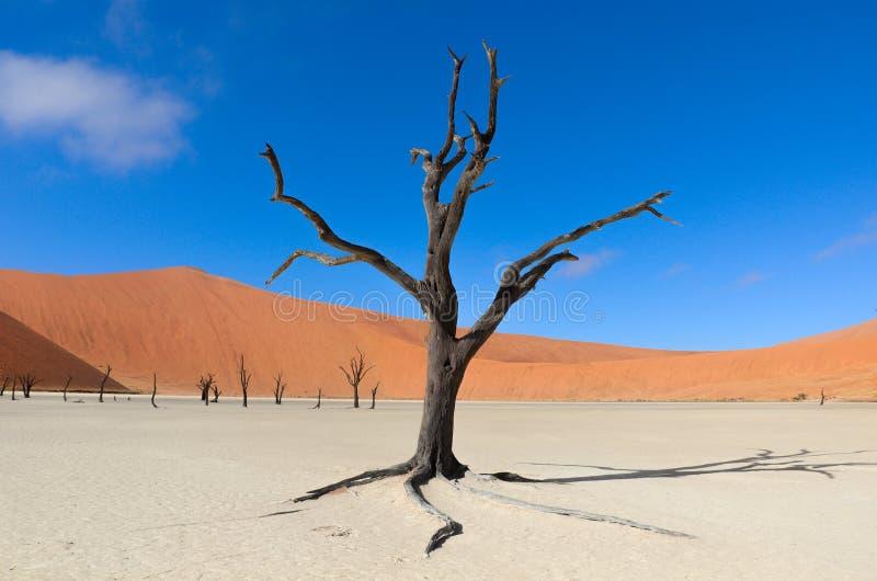 Vlei muerto, Namibia, Suráfrica fotografía de archivo libre de regalías