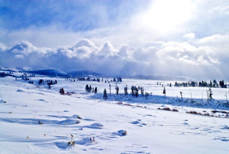 Paisaje de Yellowstone del invierno foto de archivo