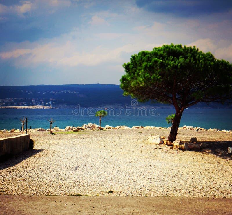 Paisaje del árbol del crikvenica de Croacia imagen de archivo libre de regalías