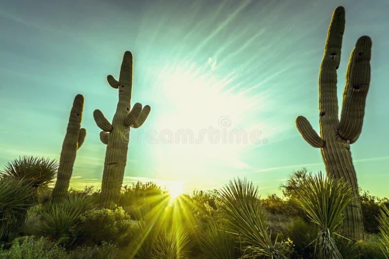 Paisaje del árbol del cactus del desierto de Arizona imágenes de archivo libres de regalías