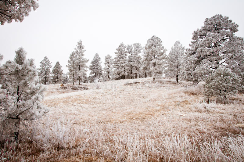 Paisaje del árbol Nevado fotos de archivo libres de regalías