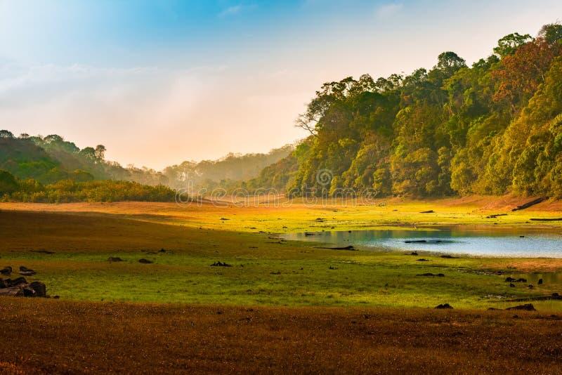 Paisaje del amanecer con el bosque y el lago salvajes en la India Parque nacional de Periyar, Kerala, la India foto de archivo libre de regalías