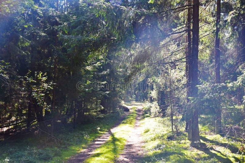 Paisaje del bosque imagenes de archivo