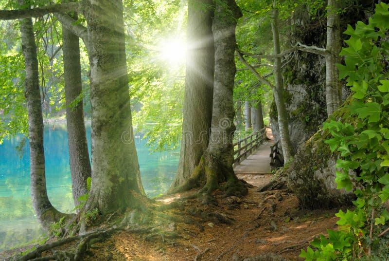 Paisaje del bosque con agua de la turquesa y el sol imagen de archivo libre de regalías