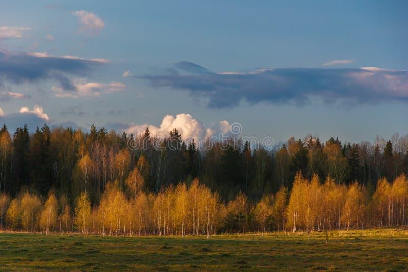 Paisaje del bosque de la primavera foto de archivo libre de regalías