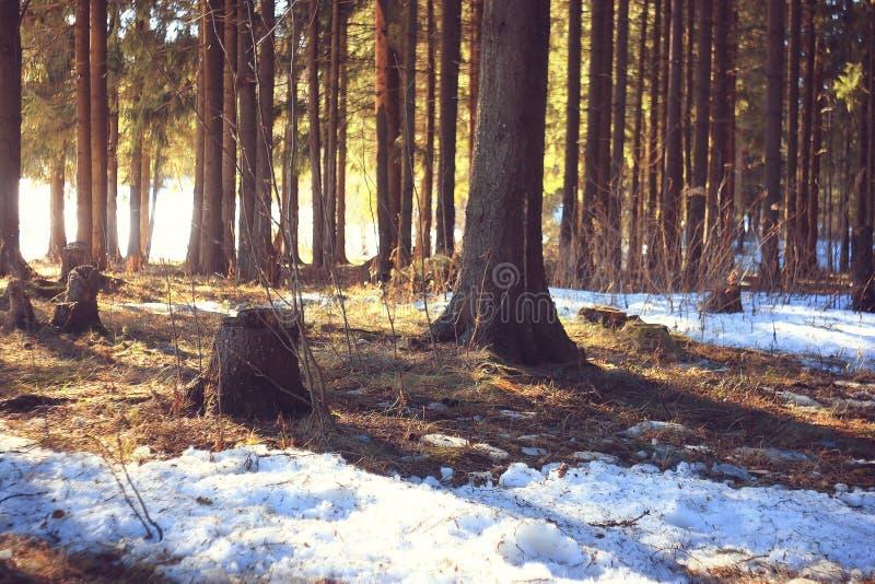 Paisaje del bosque del invierno imagenes de archivo